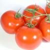 Zahngesundheitheitspfad Bild 13    Tomaten    Zahnarzt Eschweiler prohylaxe