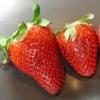 Zahngesundheitheitspfad Bild 7  Erdbeeren  Prohylaxeunterricht Katholische Grundschule Eschweiler Kinzweiler
